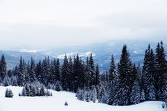 όμορφος δασικός χειμώνας Βουνό στον καπνό Καρπάθιο, Στοκ φωτογραφία με δικαίωμα ελεύθερης χρήσης