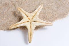 όμορφος αστερίας Στοκ εικόνες με δικαίωμα ελεύθερης χρήσης