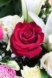Όμορφος αυξήθηκε, γαρίφαλο και lilly με τις πτώσεις νερού. Στοκ εικόνες με δικαίωμα ελεύθερης χρήσης