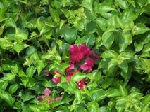 Όμορφος βγάζει φύλλα τον ενιαίο τρόπο ζωής κήπων λουλουδιών Στοκ Εικόνες