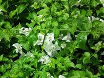 Όμορφος βγάζει φύλλα τον ενιαίο τρόπο ζωής κήπων λουλουδιών Στοκ φωτογραφία με δικαίωμα ελεύθερης χρήσης