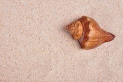 Όμορφος βράχος κοχυλιών στη ρηχή κινηματογράφηση σε πρώτο πλάνο άμμου θάλασσας Στοκ εικόνες με δικαίωμα ελεύθερης χρήσης