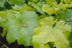 όμορφος γάμος δαχτυλιδιών Στοκ Εικόνες
