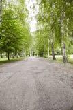 Όμορφος δρόμος στο δάσος Στοκ εικόνες με δικαίωμα ελεύθερης χρήσης