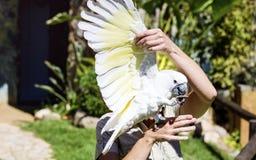 Όμορφος εκπαιδευμένος παπαγάλος cockatoo σε ετοιμότητα μιας γυναίκας στοκ φωτογραφία με δικαίωμα ελεύθερης χρήσης