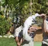 Όμορφος εκπαιδευμένος παπαγάλος cockatoo σε ετοιμότητα μιας γυναίκας στοκ φωτογραφίες
