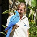 Όμορφος εκπαιδευμένος macaw παπαγάλος σε ετοιμότητα μιας γυναίκας στοκ εικόνα με δικαίωμα ελεύθερης χρήσης