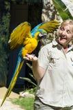 Όμορφος εκπαιδευμένος macaw παπαγάλος σε ετοιμότητα μιας γυναίκας στοκ εικόνες με δικαίωμα ελεύθερης χρήσης