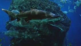Όμορφος εξωτικός βλέπει τα ψάρια και έναν καρχαρία σε ένα ενυδρείο σκηνή υποβρύχια στοκ φωτογραφία