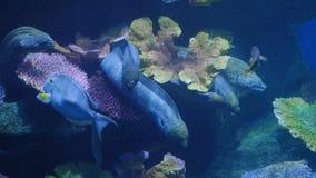 Όμορφος εξωτικός βλέπει τα ψάρια σε ένα ενυδρείο σκηνή υποβρύχια στοκ φωτογραφία
