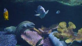 Όμορφος εξωτικός βλέπει τα ψάρια σε ένα ενυδρείο σκηνή υποβρύχια στοκ εικόνα