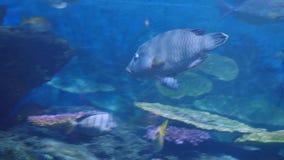 Όμορφος εξωτικός βλέπει τα ψάρια σε ένα ενυδρείο σκηνή υποβρύχια στοκ εικόνες