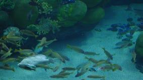 Όμορφος εξωτικός βλέπει τα ψάρια σε ένα ενυδρείο σκηνή υποβρύχια στοκ φωτογραφίες