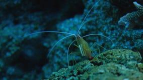 Όμορφος εξωτικός βλέπει τα ψάρια σε ένα ενυδρείο σκηνή υποβρύχια στοκ φωτογραφίες με δικαίωμα ελεύθερης χρήσης