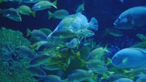 Όμορφος εξωτικός βλέπει τα ψάρια σε ένα ενυδρείο σκηνή υποβρύχια στοκ εικόνες με δικαίωμα ελεύθερης χρήσης
