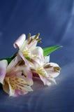 όμορφος εξωτικός κρίνος στοκ φωτογραφία με δικαίωμα ελεύθερης χρήσης