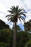 Όμορφος εξωτικός φοίνικας σε έναν βοτανικό κήπο στοκ φωτογραφία με δικαίωμα ελεύθερης χρήσης