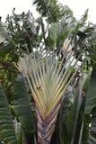 Όμορφος εξωτικός φοίνικας σε έναν βοτανικό κήπο στοκ εικόνα με δικαίωμα ελεύθερης χρήσης