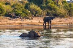 Όμορφος ελέφαντας στο εθνικό πάρκο Chobe στη Μποτσουάνα Στοκ φωτογραφία με δικαίωμα ελεύθερης χρήσης