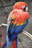 Όμορφος ζωηρόχρωμος παπαγάλος Στοκ φωτογραφίες με δικαίωμα ελεύθερης χρήσης