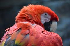 Όμορφος ζωηρόχρωμος παπαγάλος Στοκ φωτογραφία με δικαίωμα ελεύθερης χρήσης