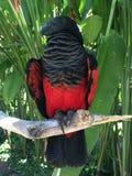 Όμορφος ζωηρόχρωμος παπαγάλος στο Μπαλί Στοκ Εικόνες