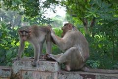 Όμορφος ζωικός πίθηκος στον κήπο εγκαταστάσεων Στοκ φωτογραφία με δικαίωμα ελεύθερης χρήσης