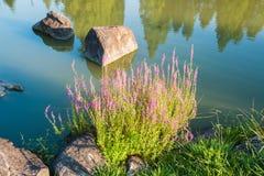 Όμορφος θάμνος λουλουδιών Στοκ φωτογραφία με δικαίωμα ελεύθερης χρήσης