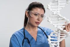 Όμορφος θηλυκός γιατρός που χρησιμοποιεί το πρότυπο DNA Στοκ Εικόνα