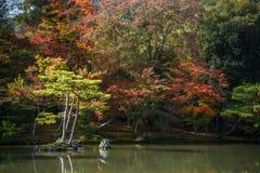 Όμορφος ιαπωνικός κήπος το φθινόπωρο της Ιαπωνίας Στοκ Εικόνα