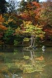 Όμορφος ιαπωνικός κήπος το φθινόπωρο της Ιαπωνίας Στοκ φωτογραφίες με δικαίωμα ελεύθερης χρήσης