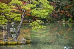 Όμορφος ιαπωνικός κήπος το φθινόπωρο της Ιαπωνίας Στοκ Εικόνες