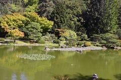 Όμορφος ιαπωνικός κήπος φθινοπώρου στο Σιάτλ Στοκ φωτογραφία με δικαίωμα ελεύθερης χρήσης