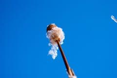 Όμορφος κάλαμος το χειμώνα Στοκ εικόνα με δικαίωμα ελεύθερης χρήσης