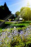 Όμορφος κήπος αναμμένος από την ηλιοφάνεια στοκ εικόνες