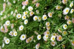 Όμορφος κήπος καλοκαιριού ή άνοιξης στοκ εικόνες με δικαίωμα ελεύθερης χρήσης