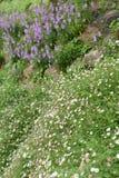 Όμορφος κήπος καλοκαιριού ή άνοιξης στοκ εικόνα με δικαίωμα ελεύθερης χρήσης