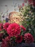 όμορφος κήπος λουλουδιών λεπίδων ανασκόπησης Στοκ Εικόνα