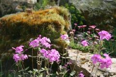 όμορφος κήπος λουλουδιών λεπίδων ανασκόπησης στοκ εικόνα με δικαίωμα ελεύθερης χρήσης