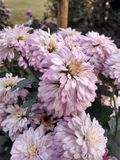 Όμορφος κήπος λουλουδιών στο ludhiana Στοκ φωτογραφία με δικαίωμα ελεύθερης χρήσης