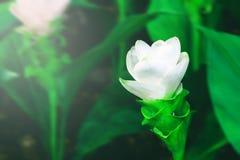Όμορφος κήπος λουλουδιών Στοκ φωτογραφία με δικαίωμα ελεύθερης χρήσης