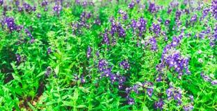 Όμορφος κήπος λουλουδιών Στοκ Εικόνες