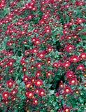όμορφος κήπος λουλουδιών στοκ εικόνα