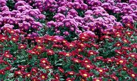 όμορφος κήπος λουλουδιών στοκ φωτογραφίες με δικαίωμα ελεύθερης χρήσης