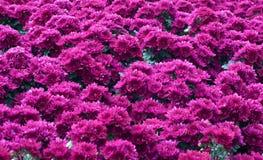 όμορφος κήπος λουλουδιών στοκ φωτογραφία