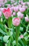 όμορφος κήπος λουλουδιών στοκ φωτογραφίες