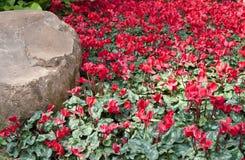 όμορφος κήπος λουλου&delt στοκ φωτογραφίες με δικαίωμα ελεύθερης χρήσης