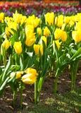 όμορφος κήπος λουλου&delt στοκ εικόνα με δικαίωμα ελεύθερης χρήσης