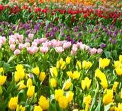 όμορφος κήπος λουλου&delt στοκ εικόνα