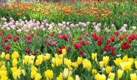 όμορφος κήπος λουλου&delt στοκ φωτογραφίες